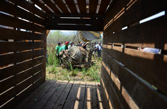 A Nepalese vetinary and technical team prepare a sedated rhino before it is relocated in Chitwan National Park some of 250 Kilometer South of Kathmandu on April 3, 2017. Conservationists on April 3 captured a rare one-horned rhinoceros in Nepal as part of an attempt to increase the number of the vulnerable animals, which are prized by wildlife poachers. Five rhinos -- one male and four female -- will be released into a national park in Nepal's far west over the coming week in the hope of establishing a new breeding group. / AFP PHOTO / PRAKASH MATHEMA