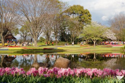 Flowers and a picture-perfect scenery soothe the senses of locals and tourists visiting the Showa Kinen Park in Japan. (Photo by Fleur Amora, Eagle News Service, Japan)