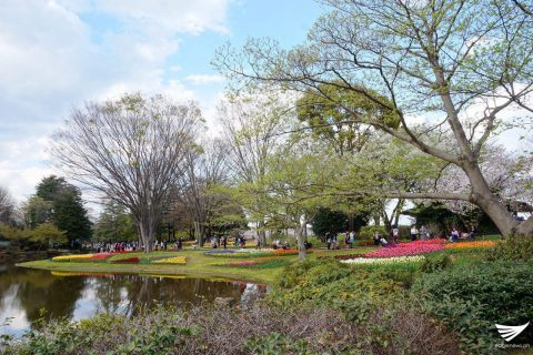 Scenes at the Showa Kinen Park