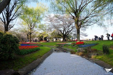 Flowers by the water in Showa Kinen Park (Photo by Fleur Amora, Eagle News Service, Japan)