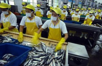 (FILE) Filipino cannery workers process sardines at the Mega Fishing Corporation in southern Zamboanga City on February 25, 2009. AFP PHOTO / THERENCE KOH